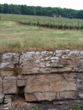 Clos de La Roche - rock below the soil