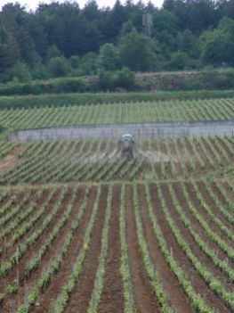 Clos de La Roche - evening spraying
