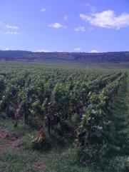Bourgogne Pinot Noir.