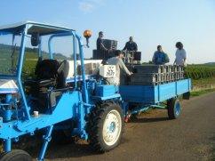 Tractor Boys Corton Bress