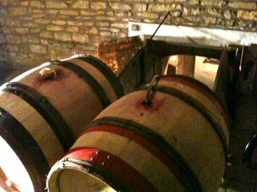 barrels waiting to be siphoned