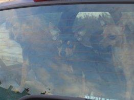 Huey, Louey & Douey...