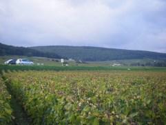 Bourgogne-Roncevie-below-RN74-arguably-should-be-Gevrey-Village-looking-towards-Clos-de-Beze