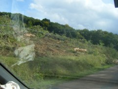 Thro-van-windscreen-shot-of-roadside-forest-land-cleared-for-vine-planting