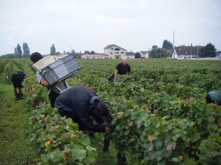 Damp Morey Village vines 4Oct Herve getting his leg over
