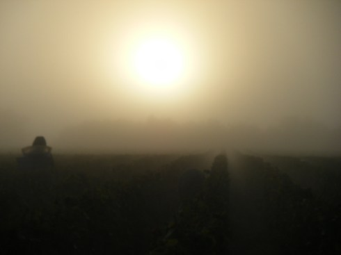 Day-11-Early-morning-and-freezing-start-on-Hautes-Cotes-above-Vosne.-Porteur-in-the-mist