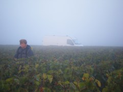 Day-11-Early-morning-on-Hautes-Cotes-above-Vosne.-Porteur-Claude-in-the-mist