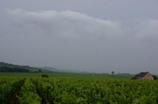 Puligny, looking to Meursault