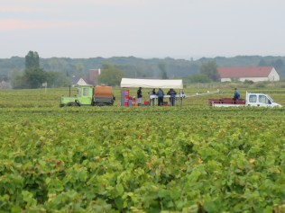 David Duband Mobile in Vines Triage contraption - think I'd rather be at a cuverie !