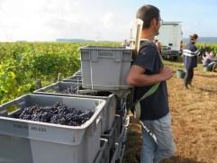 Final Day Porteur Damian lets Hautes-Cotes Pinot cases take strain