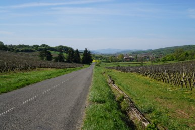 Looking towards Cruzille