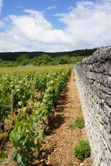 The southern wall of Clos des Perrières...