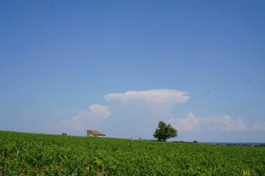 Looking East over Montrachet