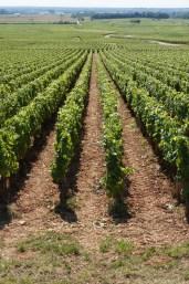 The rows of Meursault-Charmes directly below Perrières...