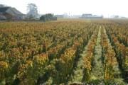 Meursault Au villages towards Sous la Velle...