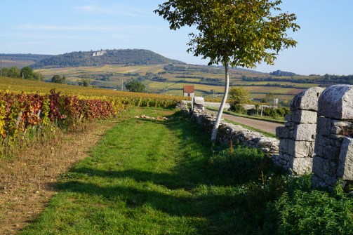 The last vines of Clos St.Jean, before Chaumées and Vergers