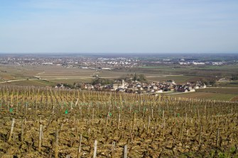 Joker in pack - really Pommard with Beaune's conurbation in the background...