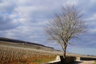 The hill of Corton