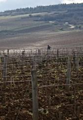 Pruning in Romanée-Conti