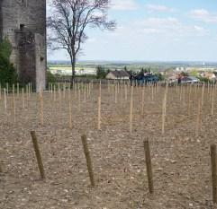 Château de Gevrey - replanting