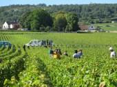 Arlaud-Vendangeurs-Morey-Clos-Solon