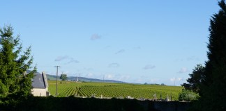 Puligny towards Meursault