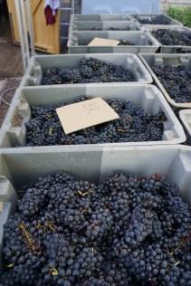 Damoy's Bourgogne...