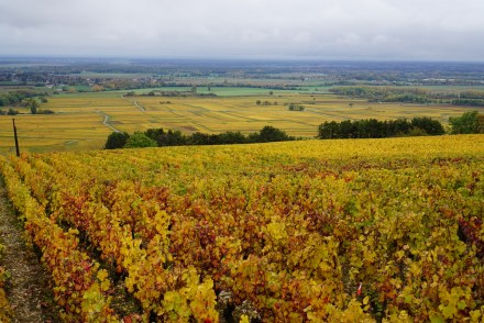 On the hill between Volnay and Pommard