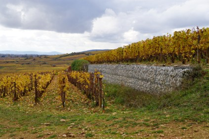 Clos de La Féguine, below pinot, above chardonnay