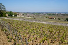 Over Taillepieds towards Volnay...