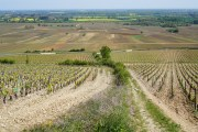 Looking down the border of Taillepieds (left) and Clos des Chênes...