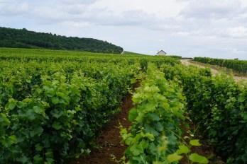 Echézeaux - looking north