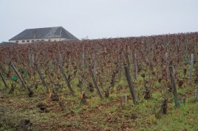 Horsetails in Corton Grèves