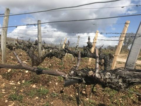 Musigny Vieilles-Vignes