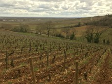 From the 'mountain' of Beaune over Coucherias towards Pommard