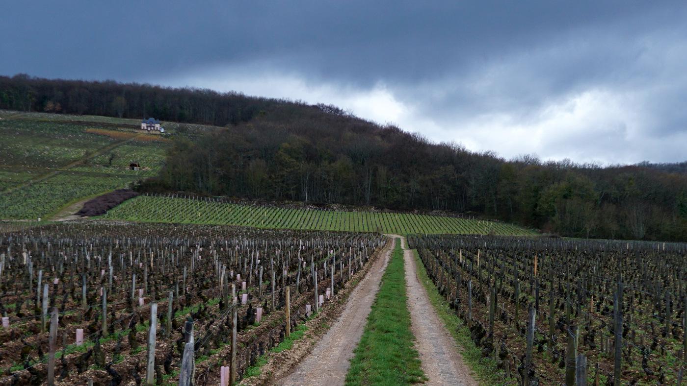 Domaine Arnoux-Lachaux – Latricières – Burgundy-Report