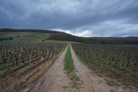 The vineyard road between the Camus and Trapet exploitations...