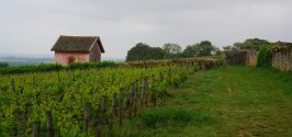 Above Meursault...