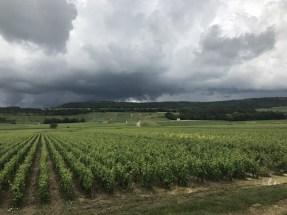 Puligny hillside