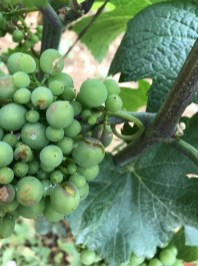 Beaune Cent-Vignes