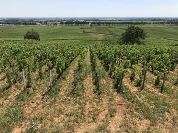Over Clos des Mouches towards the route nationale...