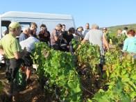 Arlaud-Vendange-Team-Casse-Croute-break-Chambolle-Village