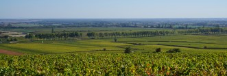 Towards RN974 from top of Clos des Mouches