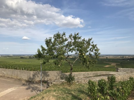 Jogging back to Beaune (from Clos des Chênes)