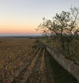 Evening light - 2 - Volnay