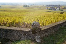 Also Montrachet - looking towards the vines of Chassagne...