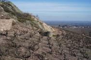 THe green rock at the top of Rochegrès (MàV)