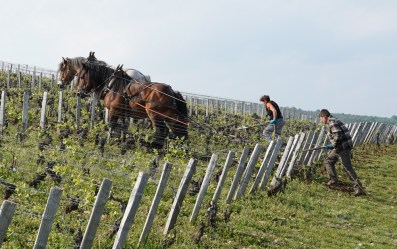 Horses in Reignots...