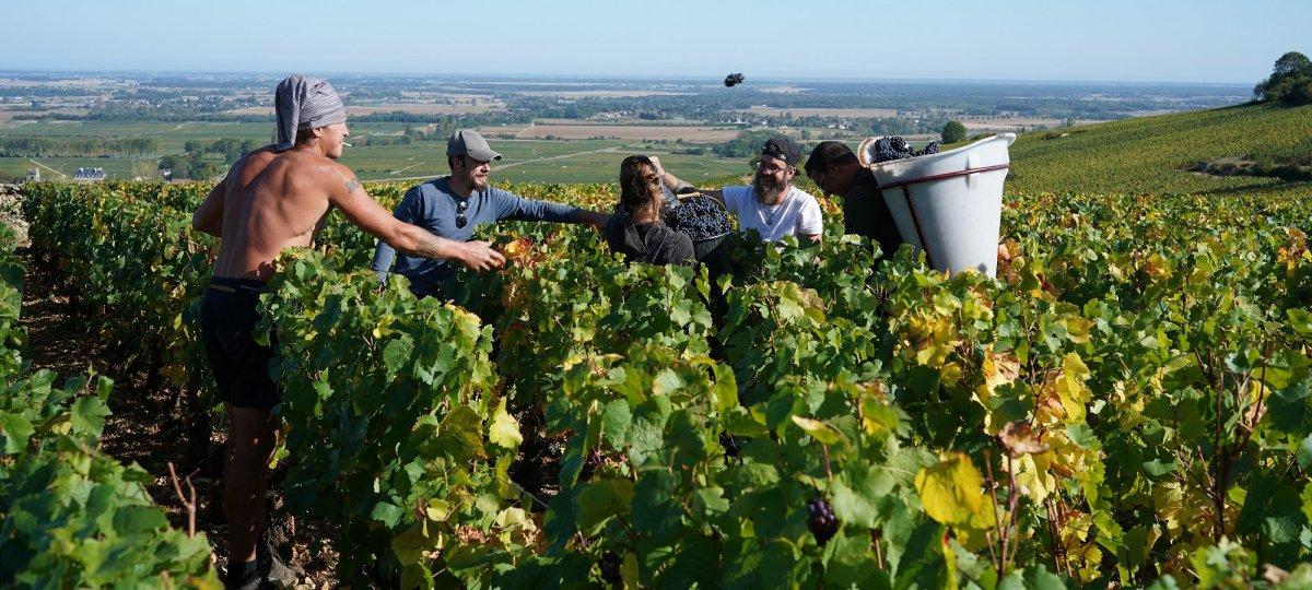2019 Burgundy Harvest