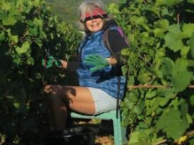 Martine in her Clos de Vougeot Jardin